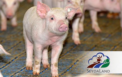 ©Seydaer Landwirtschafts GmbH