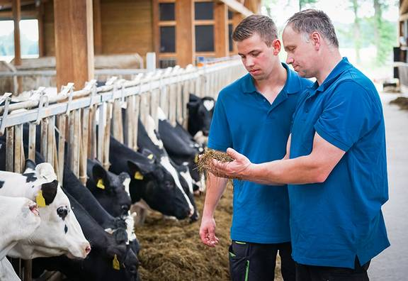 Ausbilder zeigt die Nahrung für die Kühe