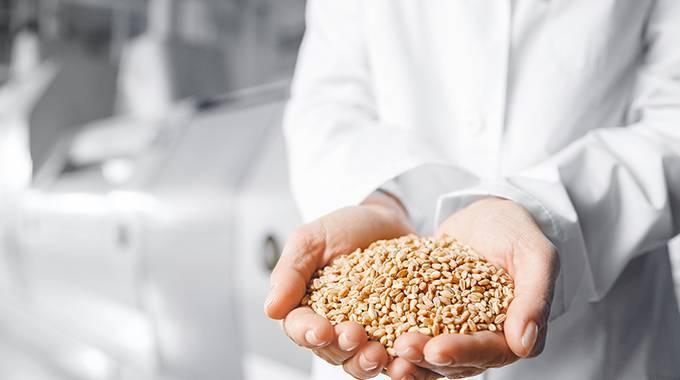 Person hält Getreide in den Händen